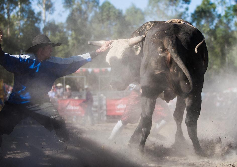 Picton Rodeo 2014-168