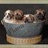 Allport s Bucket-O-Puppies 6.5x5.25