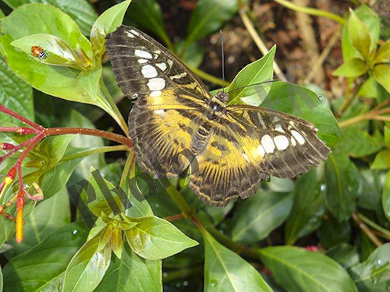 DSC00646 Butterfly 2 FINAL