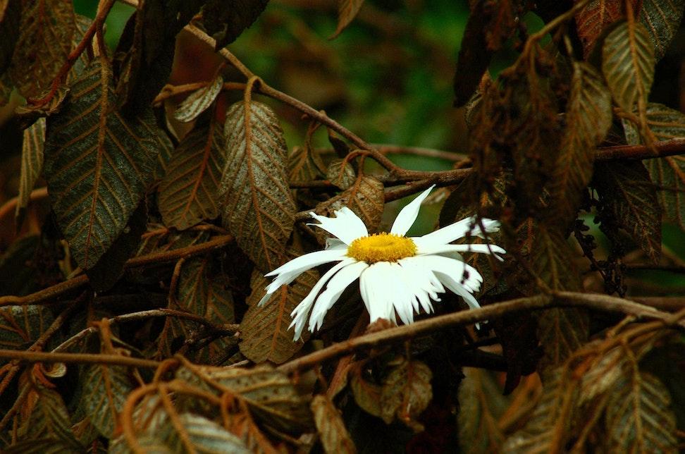 Flowers_0006
