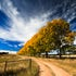 The Road To Yonder - Glen Innes - Travelling the New England Highway at Autumn you're find the many deciduous trees dropping their stunning yellow, brown...
