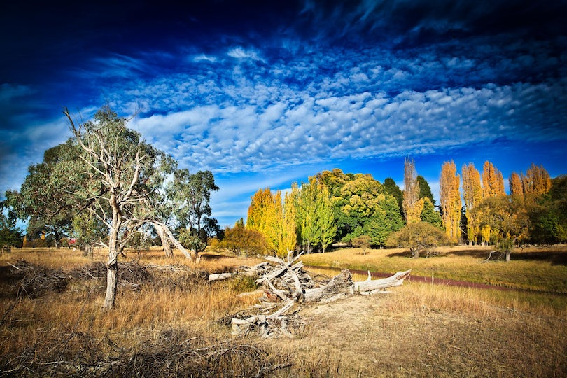 Autumn Skies - Armidale - Driving past this scene, one could not stop to capture this autumn paradise - high clouds, yellow trees and small creek with...