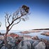 Rock Tree - Binalong Bay - The roots of this tree twist and entwine themselves deep into the lichen covered rocks of the Bay of Fires. A clear sunset produced...