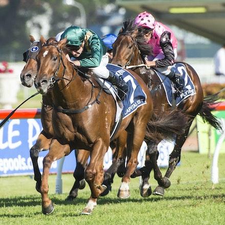 Capitalist-ShinnBlake-03192016-5758 - SYDNEY, Australia:  CAPITALIST (Written Tycoon - Kitalpha) wins the G1 Longines Golden Slipper at Rosehill Gardens...