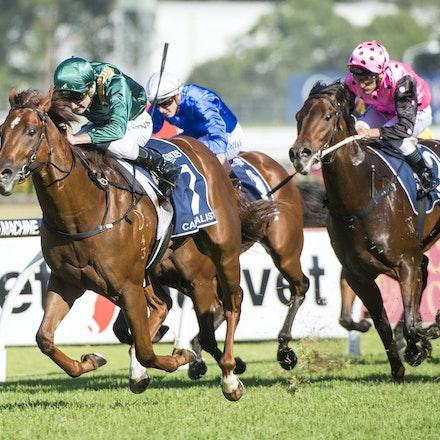 Capitalist-ShinnBlake-03192016-5766 - SYDNEY, Australia:  CAPITALIST (Written Tycoon - Kitalpha) wins the G1 Longines Golden Slipper at Rosehill Gardens...