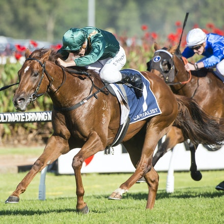 Capitalist-ShinnBlake-03192016-5772 - SYDNEY, Australia:  CAPITALIST (Written Tycoon - Kitalpha) wins the G1 Longines Golden Slipper at Rosehill Gardens...