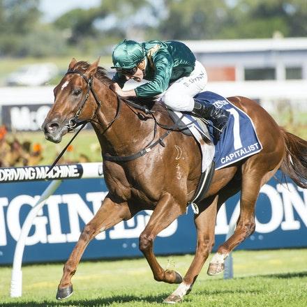 Capitalist-ShinnBlake-03192016-5776 - SYDNEY, Australia:  CAPITALIST (Written Tycoon - Kitalpha) wins the G1 Longines Golden Slipper at Rosehill Gardens...