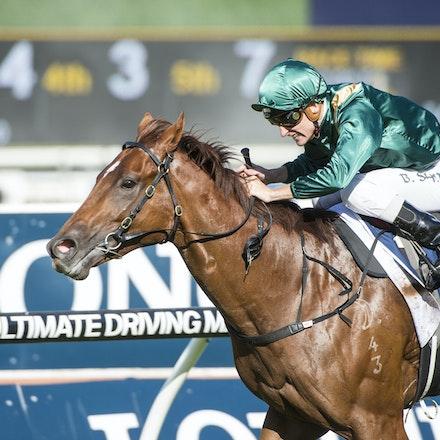 Capitalist-ShinnBlake-03192016-5784 - SYDNEY, Australia:  CAPITALIST (Written Tycoon - Kitalpha) wins the G1 Longines Golden Slipper at Rosehill Gardens...