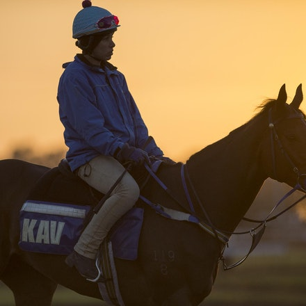 AtlanticJewel-10042013-3333 - The sun rises at Flemington Racecourse during morning trackwork during the Spring Racing Carnival.  Photo by Bronwen Healy.