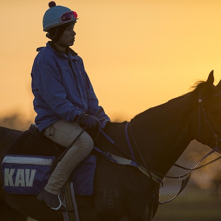AtlanticJewel-10042013-3334 - The sun rises at Flemington Racecourse during morning trackwork during the Spring Racing Carnival.  Photo by Bronwen Healy.