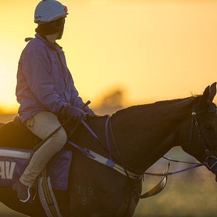 AtlanticJewel-10042013-3342_1 - The sun rises at Flemington Racecourse during morning trackwork during the Spring Racing Carnival.  Photo by Bronwen Healy.
