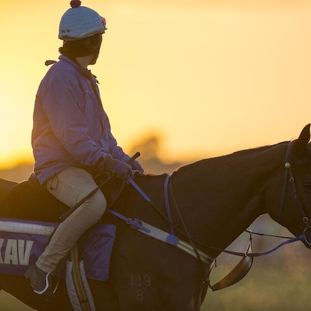 AtlanticJewel-10042013-3343 - The sun rises at Flemington Racecourse during morning trackwork during the Spring Racing Carnival.  Photo by Bronwen Healy.