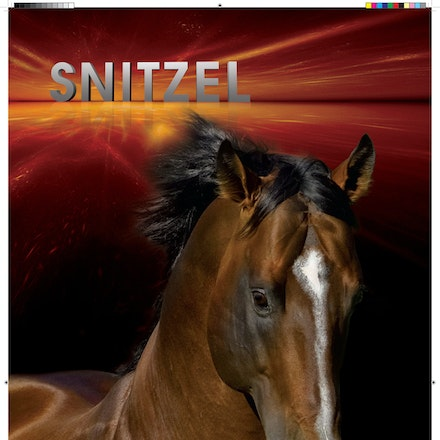 132748-Snitzel-Marquee-IHP