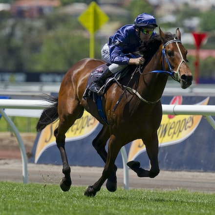 AtlanticJewel-RoddMichael-10292011-7187 - Atlantic Jewel (Fastnet Rock - Regard) wins the G2 Wakeful Stakes at Flemington on 29 October 2011.  Ridden by...
