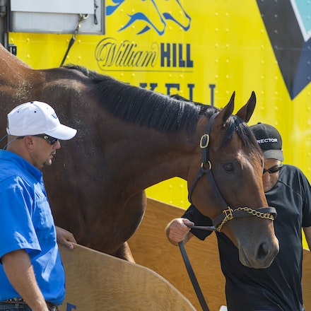 AmericanPharoah-07302015-1624 - 2015 Triple Crown Champion, American Pharoah arrives at Monmouth Park Racecourse to prepare for the 2015 Haskell Invitational...