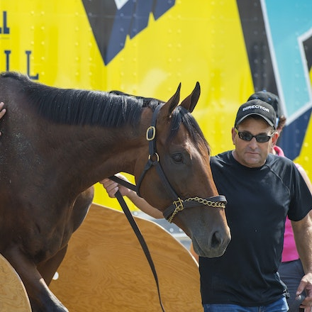 AmericanPharoah-07302015-1632 - 2015 Triple Crown Champion, American Pharoah arrives at Monmouth Park Racecourse to prepare for the 2015 Haskell Invitational...