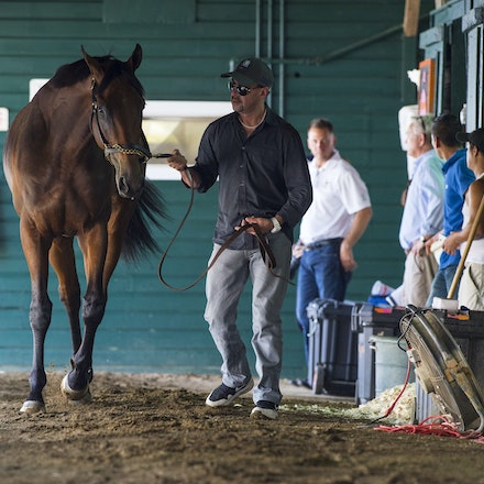 AmericanPharoah-07302015-1736 - 2015 Triple Crown Champion, American Pharoah arrives at Monmouth Park Racecourse to prepare for the 2015 Haskell Invitational...