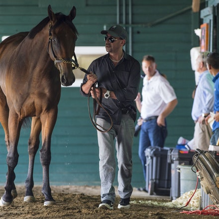 AmericanPharoah-07302015-1741 - 2015 Triple Crown Champion, American Pharoah arrives at Monmouth Park Racecourse to prepare for the 2015 Haskell Invitational...