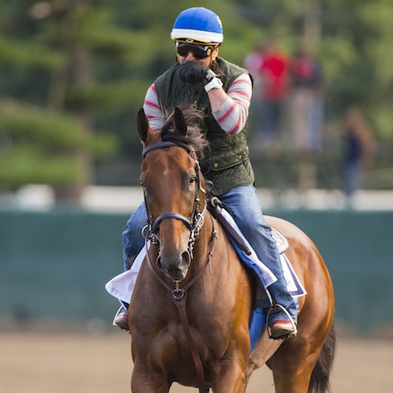 AmericanPharoah-07302015-2455 - State Troopers from New Jersey Police Department keep a watchful eye over 2015 Triple Crown Champion, American Pharoah....