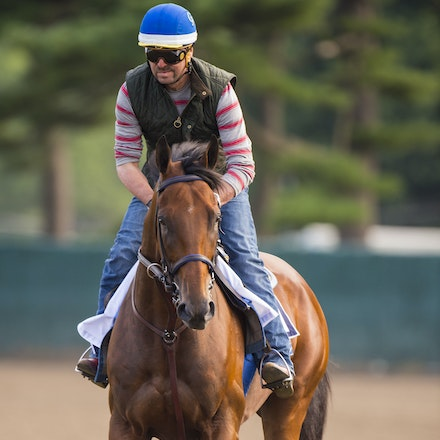AmericanPharoah-07302015-2458 - State Troopers from New Jersey Police Department keep a watchful eye over 2015 Triple Crown Champion, American Pharoah....