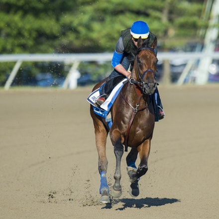 AmericanPharoah-07312015-3355 - 2015 Triple Crown Champion, American Pharoah at Monmouth Park Racecourse, preparing for the 2015 Haskell Invitational on...