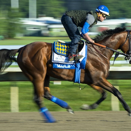 AmericanPharoah-07312015-6519 - 2015 Triple Crown Champion, American Pharoah at Monmouth Park Racecourse, preparing for the 2015 Haskell Invitational on...