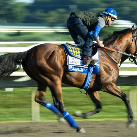 AmericanPharoah-07312015-6527 - 2015 Triple Crown Champion, American Pharoah at Monmouth Park Racecourse, preparing for the 2015 Haskell Invitational on...