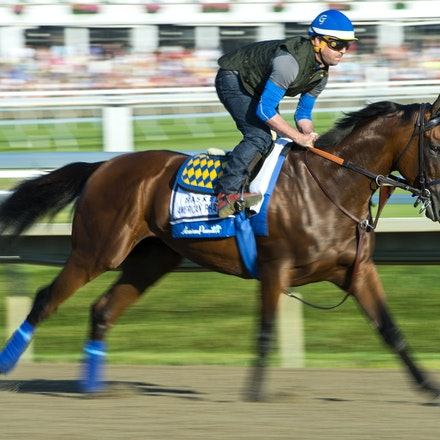 AmericanPharoah-07312015-6508 - 2015 Triple Crown Champion, American Pharoah at Monmouth Park Racecourse, preparing for the 2015 Haskell Invitational on...