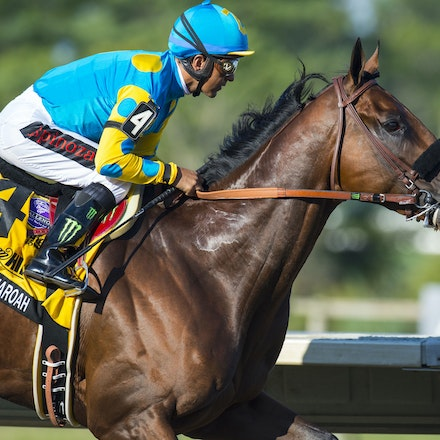 AmericanPharoah-EspinozaVictor-08022015-6031 - 2015 Triple Crown winner American Pharoah (Pioneerof The Nile - Littleprincessemma) wins the G1 Haskell...