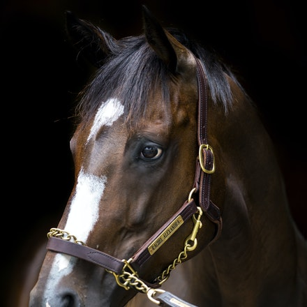 Rachel Alexandra - Rachel Alexandra (Medaglia d'Oro - Lotta Kim) is a retired champion racemare and 2009 Horse of the Year in North America.  She is owned...