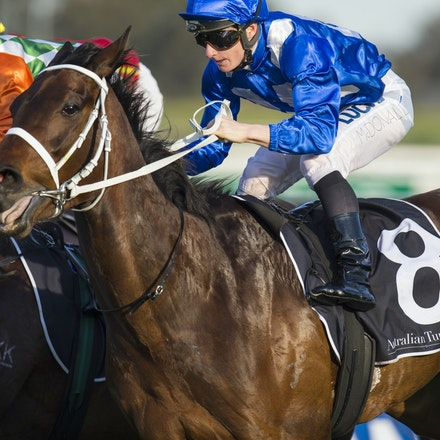 Winx-McDonaldJames-09122015-3773 - Winx (Street Cry - Vegas Showgirl) wins the G2 Theo Marks Stakes on 12 September 2015.  She was ridden by James McDonald...