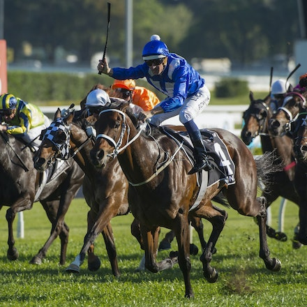 Winx-McDonaldJames-10032015-5365_1 - SYDNEY, AUSTRALIA. Winx (Street Cry - Vegas Showgirl) wins the G1 Epsom Handicap at Royal Randwick on 3 October 2015....