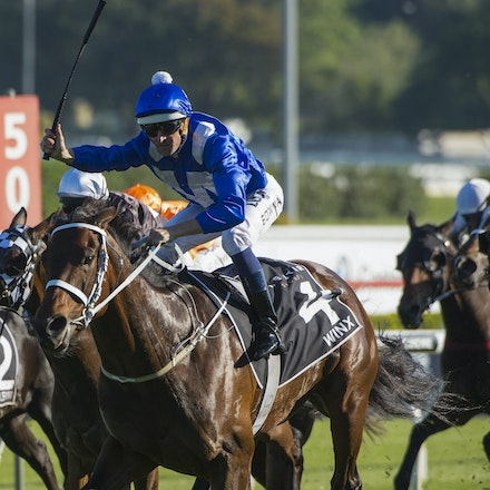 Winx-McDonaldJames-10032015-5366 - SYDNEY, AUSTRALIA. Winx (Street Cry - Vegas Showgirl) wins the G1 Epsom Handicap at Royal Randwick on 3 October 2015....