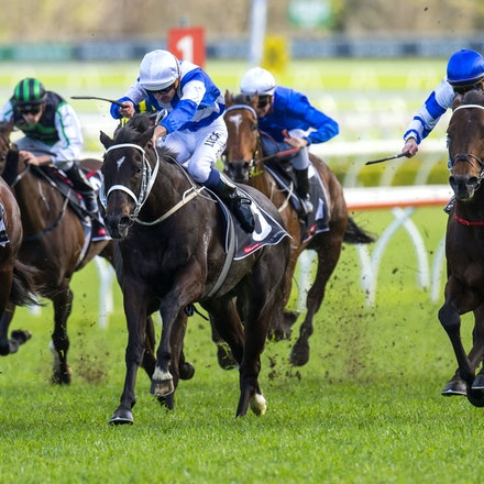 Kermadec-SchofieldGlyn-09192015-7275 - KERMADEC (Teofilo - Hy Fuji) wins the George Main Stakes (G1) at Royal Randwick on 19 September 2015.   Ridden by...