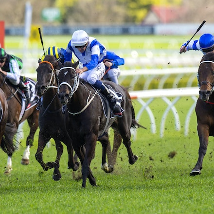 Kermadec-SchofieldGlyn-09192015-7272 - KERMADEC (Teofilo - Hy Fuji) wins the George Main Stakes (G1) at Royal Randwick on 19 September 2015.   Ridden by...