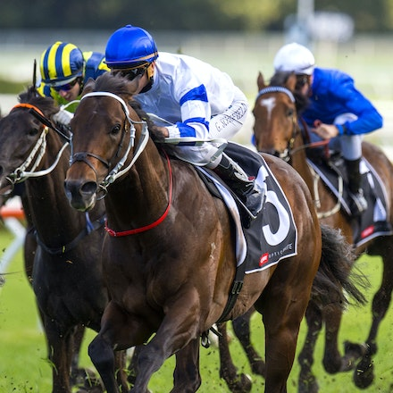 Kermadec-SchofieldGlyn-09192015-7283 - KERMADEC (Teofilo - Hy Fuji) wins the George Main Stakes (G1) at Royal Randwick on 19 September 2015.   Ridden by...