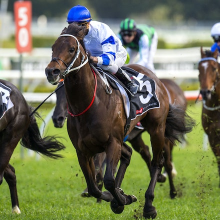 Kermadec-SchofieldGlyn-09192015-7286 - KERMADEC (Teofilo - Hy Fuji) wins the George Main Stakes (G1) at Royal Randwick on 19 September 2015.   Ridden by...