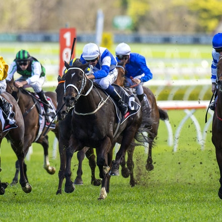 Kermadec-SchofieldGlyn-09192015-7274 - KERMADEC (Teofilo - Hy Fuji) wins the George Main Stakes (G1) at Royal Randwick on 19 September 2015.   Ridden by...