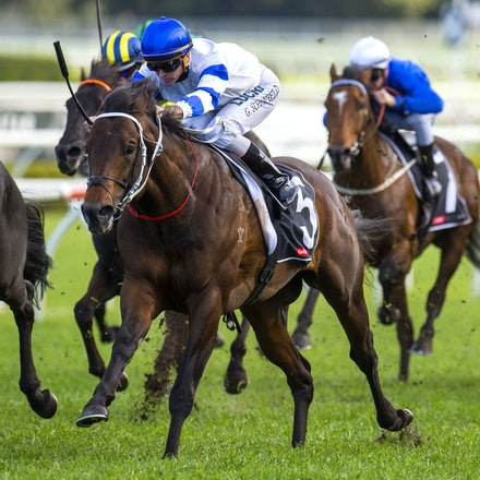 Kermadec-SchofieldGlyn-09192015-7284 - KERMADEC (Teofilo - Hy Fuji) wins the George Main Stakes (G1) at Royal Randwick on 19 September 2015.   Ridden by...