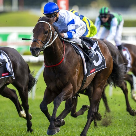 Kermadec-SchofieldGlyn-09192015-7287 - KERMADEC (Teofilo - Hy Fuji) wins the George Main Stakes (G1) at Royal Randwick on 19 September 2015.   Ridden by...