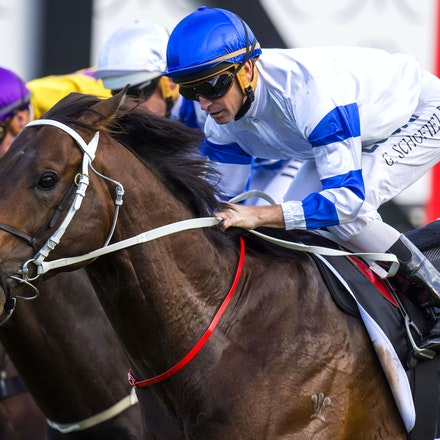 Kermadec-SchofieldGlyn-09192015-7300 - KERMADEC (Teofilo - Hy Fuji) wins the George Main Stakes (G1) at Royal Randwick on 19 September 2015.   Ridden by...