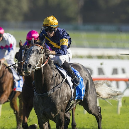 Chautauqua-BerryTommy-04022016-1506 - CHAUTAUQUA (Encosta de Lago - Lovely Jubly) wins the G1 TJ Smith Stakes for the 2nd successive year at Royal Randwick...