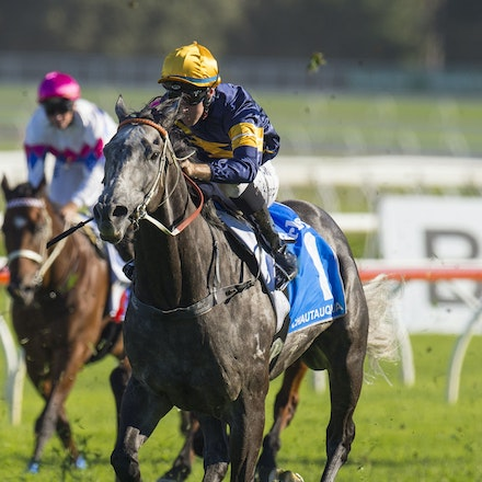 Chautauqua-BerryTommy-04022016-1507 - CHAUTAUQUA (Encosta de Lago - Lovely Jubly) wins the G1 TJ Smith Stakes for the 2nd successive year at Royal Randwick...
