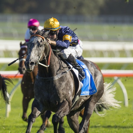 Chautauqua-BerryTommy-04022016-1508 - CHAUTAUQUA (Encosta de Lago - Lovely Jubly) wins the G1 TJ Smith Stakes for the 2nd successive year at Royal Randwick...