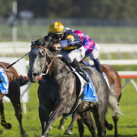 Chautauqua-BerryTommy-04022016-1509 - CHAUTAUQUA (Encosta de Lago - Lovely Jubly) wins the G1 TJ Smith Stakes for the 2nd successive year at Royal Randwick...
