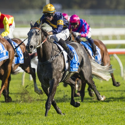 Chautauqua-BerryTommy-04022016-1510_1 - CHAUTAUQUA (Encosta de Lago - Lovely Jubly) wins the G1 TJ Smith Stakes for the 2nd successive year at Royal Randwick...