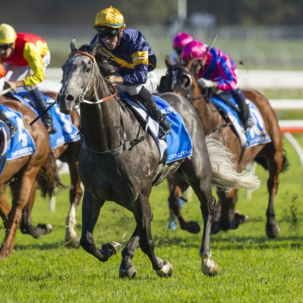 Chautauqua-BerryTommy-04022016-1511_1 - CHAUTAUQUA (Encosta de Lago - Lovely Jubly) wins the G1 TJ Smith Stakes for the 2nd successive year at Royal Randwick...