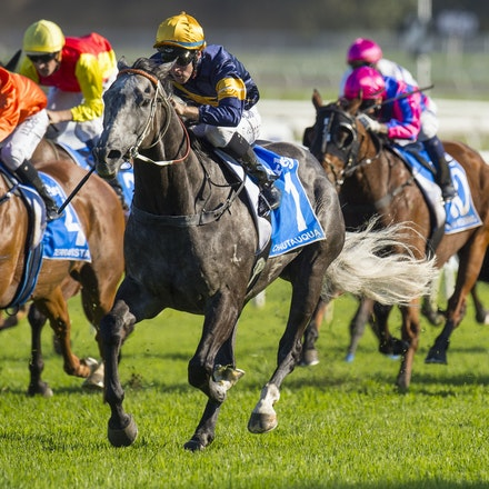 Chautauqua-BerryTommy-04022016-1512_1 - CHAUTAUQUA (Encosta de Lago - Lovely Jubly) wins the G1 TJ Smith Stakes for the 2nd successive year at Royal Randwick...