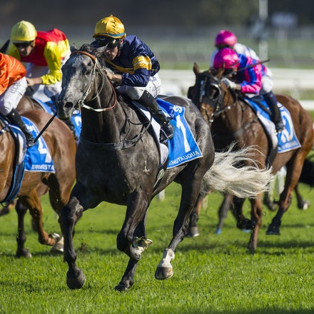 Chautauqua-BerryTommy-04022016-1512 - CHAUTAUQUA (Encosta de Lago - Lovely Jubly) wins the G1 TJ Smith Stakes for the 2nd successive year at Royal Randwick...