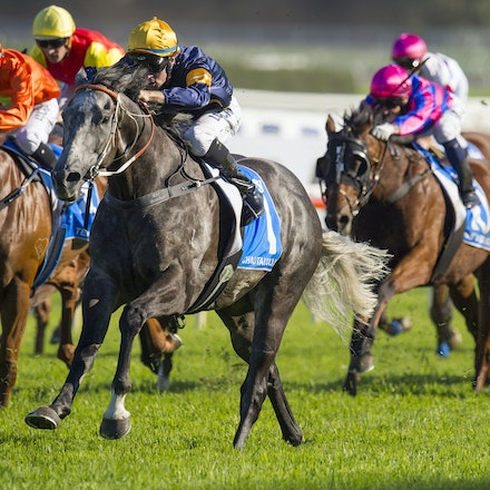 Chautauqua-BerryTommy-04022016-1513 - CHAUTAUQUA (Encosta de Lago - Lovely Jubly) wins the G1 TJ Smith Stakes for the 2nd successive year at Royal Randwick...